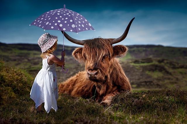暑そうな牛に日傘を差し出す優しい女の子